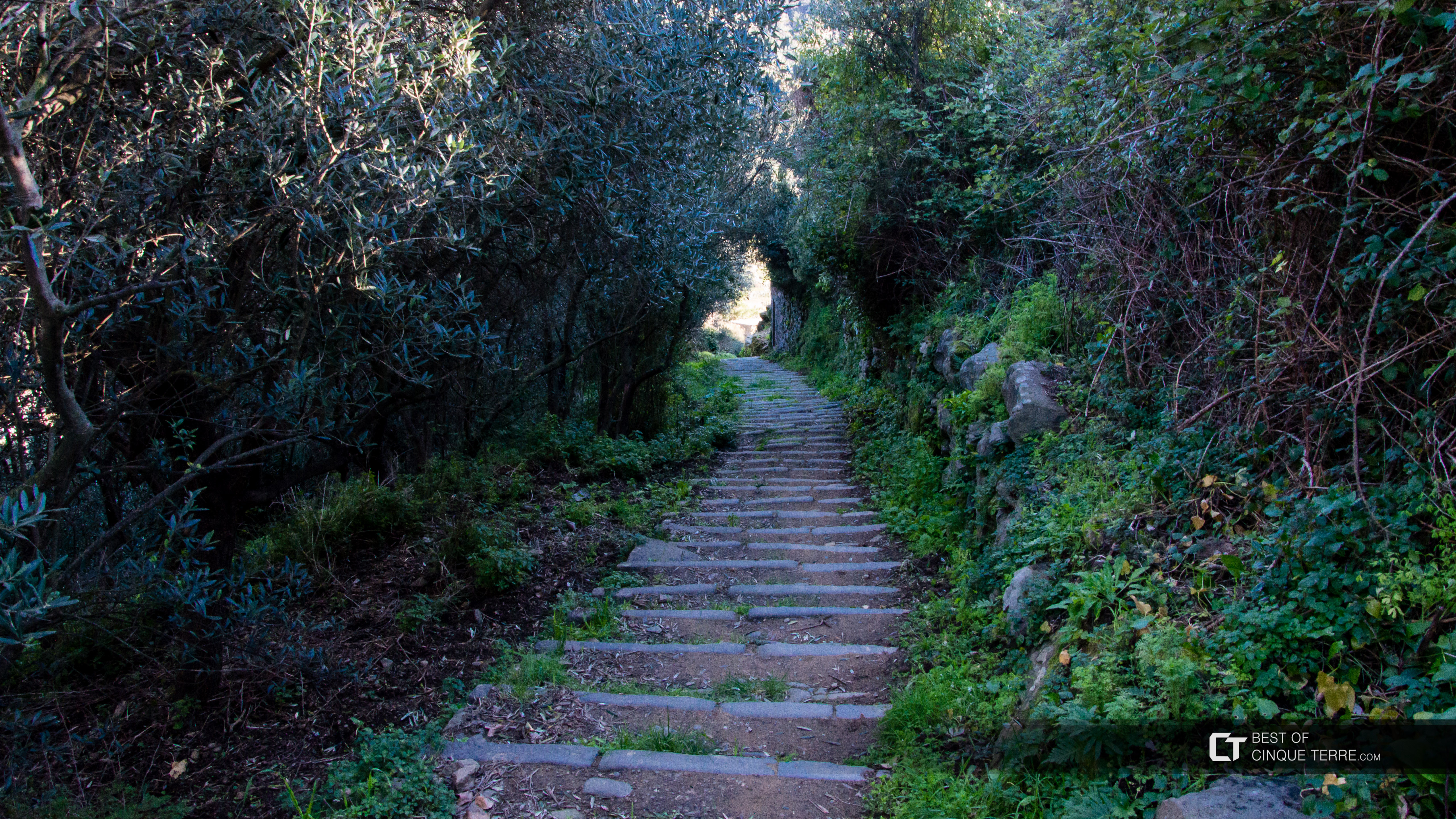 Descent from Volastra to Manarola (1200 steps), Trails, Cinque Terre, Italy