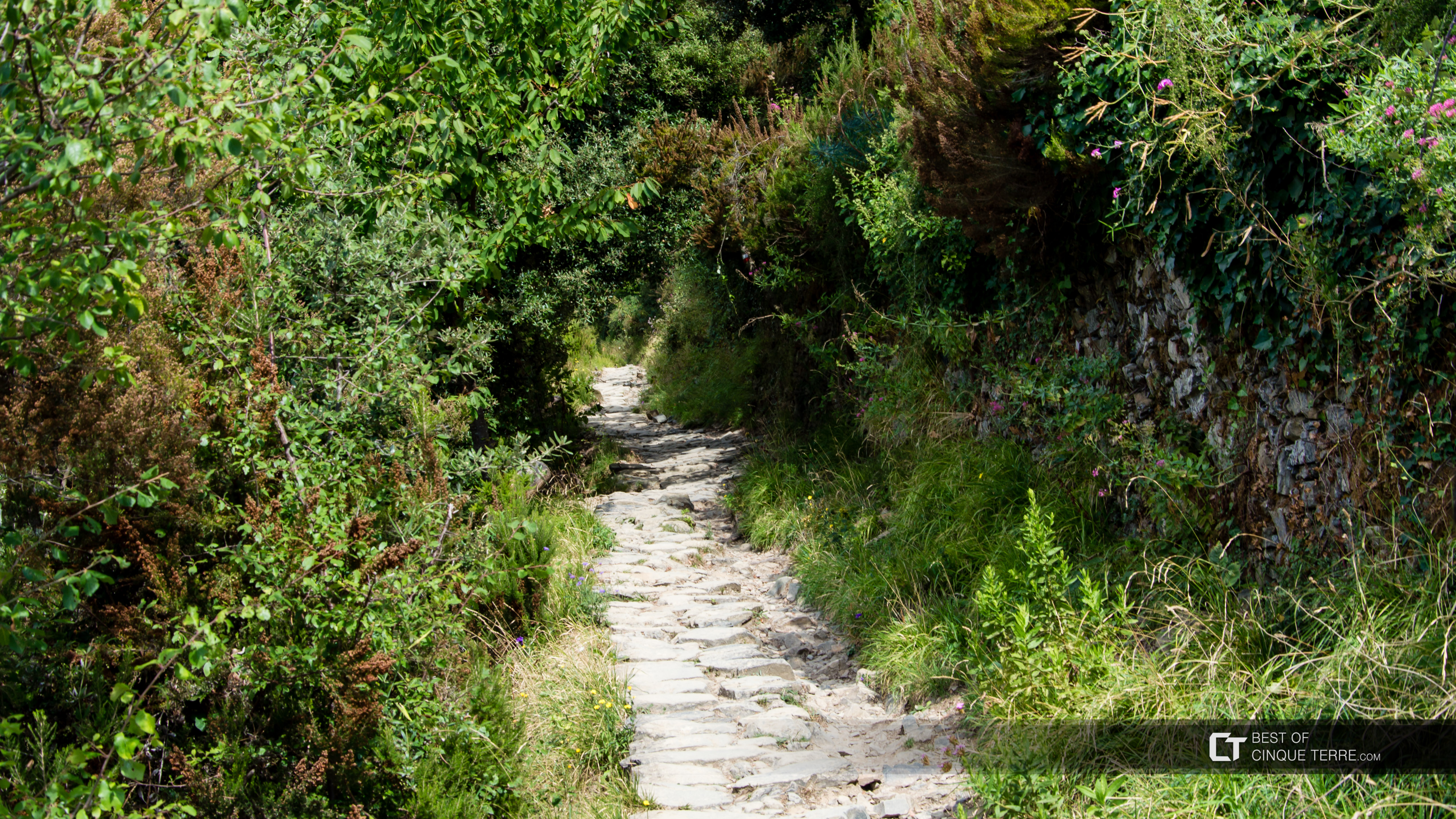 The long route from Corniglia to Vernazza, Trails, Cinque Terre, Italy